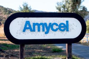 Amycel – спонсор конференции. Большинство королевских шампиньонов в Европе выращивают на их мицелии